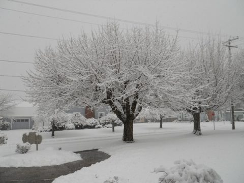 The trees are beautiful with the snow covering them!  Another inch fell during the worship service.